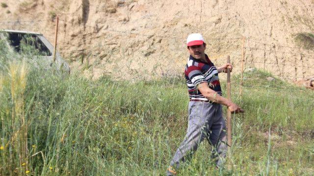 Aydın'da tırpan işçilerine günlük 150 lira yevmiye