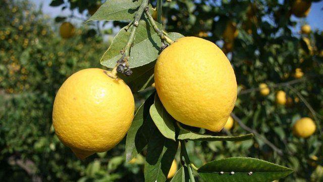 Limonun Bilinmeyen Faydaları