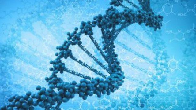 Amerika'da hastalıklı DNA hücreleri temizlendi