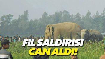 Bangladeş'teki fil saldırısında 4 kişi öldü