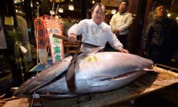 Japonlar çıldırdı! Tek bir balık için servet ödüyorlar