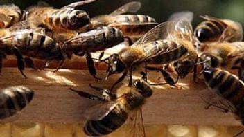 500 binin üzerinde arıyı öldüren iki çocuk gözaltına alındı