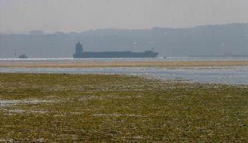 İzmir Körfezi'nde endişe yaratan görüntü - Deniz Marulu nedir?