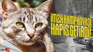 'Tomtom' adlı kediyi vahşice öldüren zanlıya hapis cezası